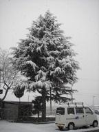 Snowy_2