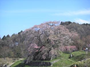 Sakura200904