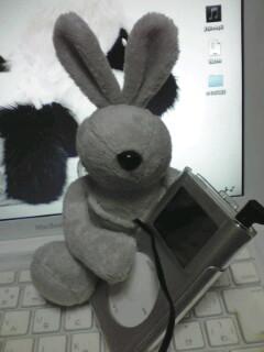 ウサギ捕獲☆