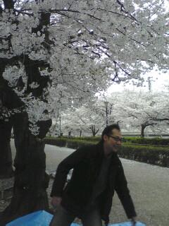 桜を愛でつつ東北を思い…