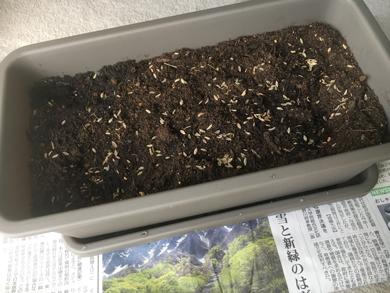 Tokihome180504